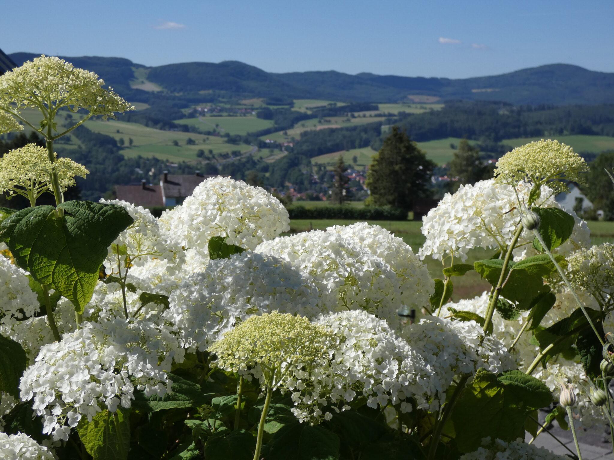 Vom Dreierhof genießt man einen herrlichen Blick Richtung Dammersfeld.